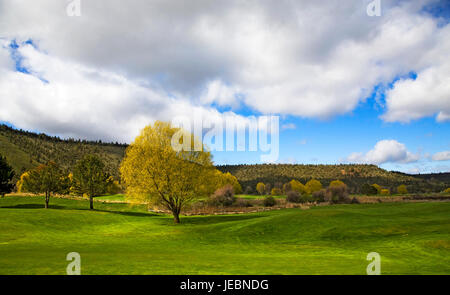 A large weeping willow tree on a grassy lawn on an early spring day. - Stock Photo