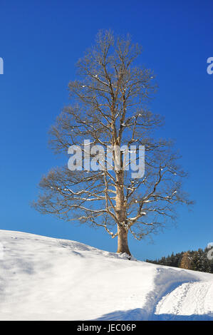 To book, solitaire tree, unmarked, winter, serial, - Stock Photo
