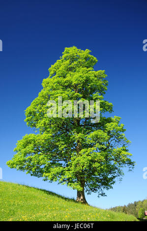 To book, solitaire tree, unmarked, summer, serial, - Stock Photo