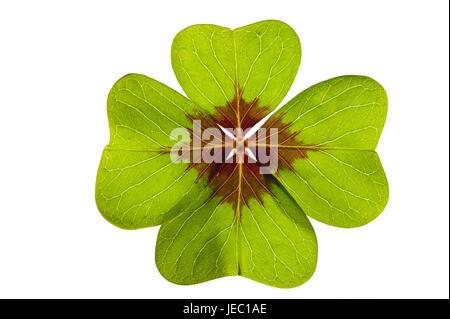 Cloverleaf, 4-leaved, luck bringer, Frei's plate, background, clover, leaves, four, Frei's plate, green, white, - Stock Photo