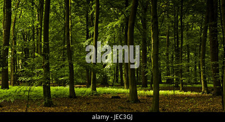 Germany, Hamburg, Winterhude, park, town park, wood, - Stock Photo