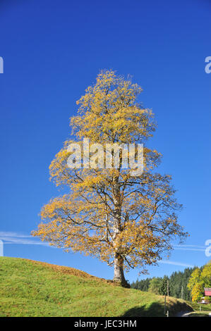 To book, solitaire tree, unmarked, autumn, serial, - Stock Photo