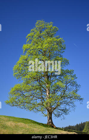 To book, solitaire tree, unmarked, spring, serial, - Stock Photo