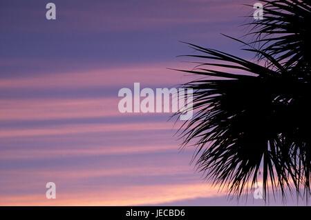 Palm dawn, JN Ding Darling National Wildlife Refuge, Florida - Stock Photo