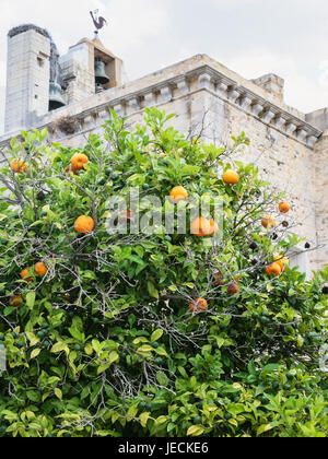 Travel to Algarve Portugal - tangerine tree with ripe fruits and medieval Faro Cathedral on background - Stock Photo
