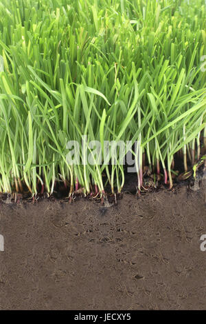 Surface of the earth, cross section, grass, ground, medium close-up, - Stock Photo