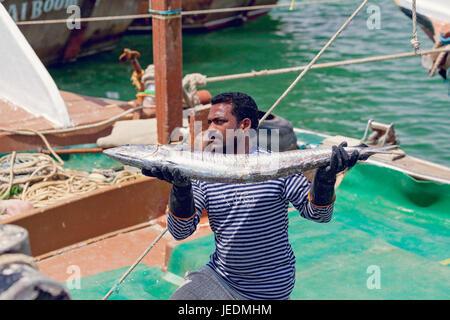 Fisherman bringing in frozen catch of Kingfish at Al-Khor, Qatar - Stock Photo