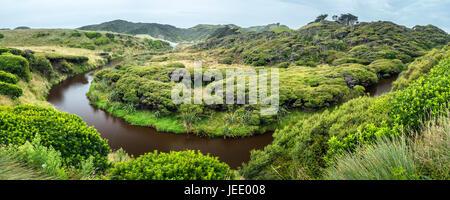 New Zealand, South Island, Tasman, warped kanuka and manuka trees at Wharariki Beach Walk - Stock Photo