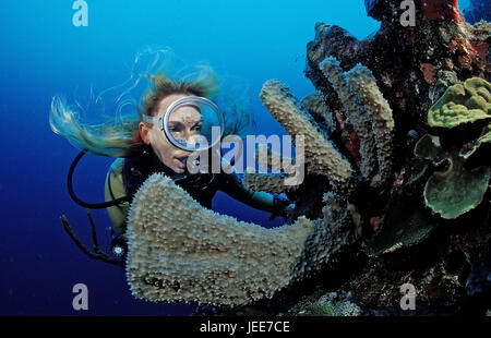Diver, coral reef, Saint Lucia, the Caribbean, - Stock Photo