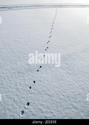 Snow surface, animal tracks, snow, impressions, track, animal, paws, paw impressions, snow caps, deserted, exit, - Stock Photo