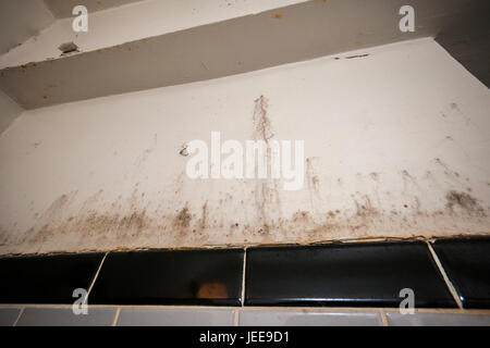 A damaged bathroom wall in New York showing the growth of mold on Friday, June 23, 2017. (© Richard B. Levine) - Stock Photo