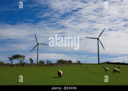 Wind turbines on pasture with sheeps.British wind farm,North Wales,Uk.Green energy production,wind turbines Uk.Renewable - Stock Photo