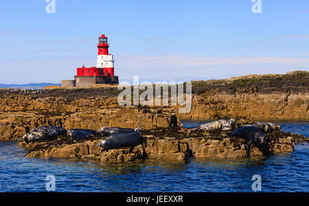 Farne Islands Landscape.  Seals resting on rocks on the Farne Islands in Northern England. In the background is - Stock Photo