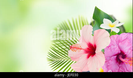 tropical flowers and leaves - banner of fresh hibiscus and frangipani flowers and exotic palm leaves on green bokeh - Stock Photo