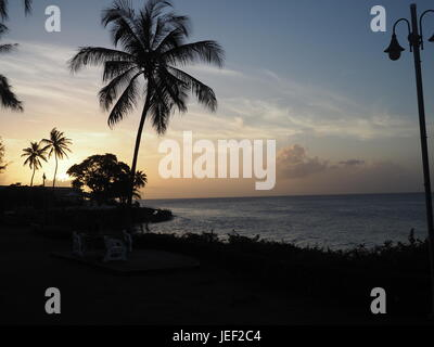 Palm Tree Sunset - Stock Photo