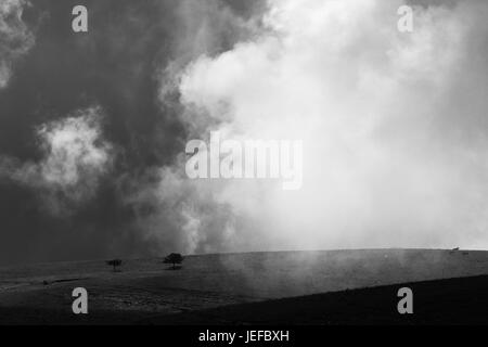 Two small, isolated trees on top of a hill, with mist and fog Stock Photo
