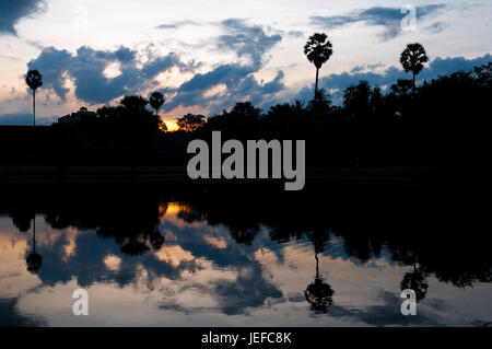 Reflection of sugar palm trees in the tropical rainforest of Cambodia at sunrise in the archaeological ruin of Angkor - Stock Photo