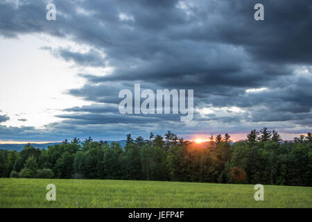 Dramatic Sunset Over Pine Trees - Stock Photo