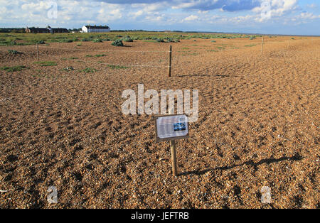 Suffolk Wildlife Trust sign about roped off nesting sites for birds, Shingle Street, Suffolk, England, UK - Stock Photo