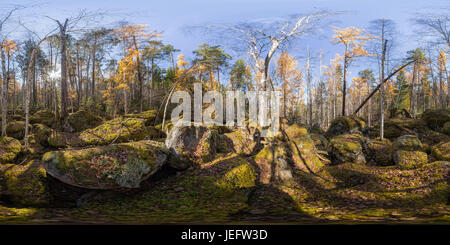 Spherical panorama 360 degrees 180 old moss-covered boulders in a coniferous forest. - Stock Photo