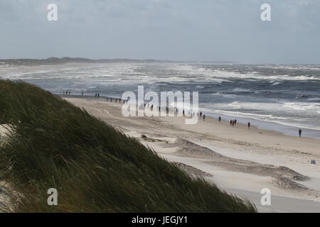 Hvide Sande, Danish Westcoast. 25th Jun, 2017. The 17th edition of North Sea Beach Marathon on the Danish Westcoast, - Stock Photo