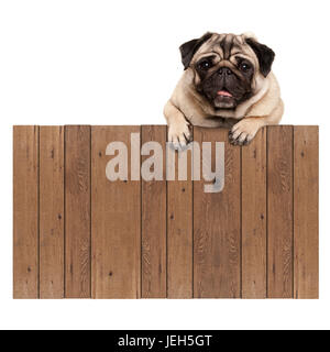 cute pug puppy dog hanging with paws on blank wooden fence promotional sign, isolated on white background - Stock Photo