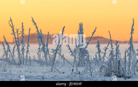 Hoarfrost covers black spruce trees as ground fog and dusk descend on Palmer Hay Flats in South-central Alaska in - Stock Photo