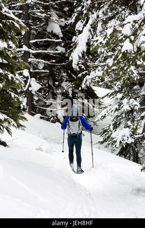 Female snowshoeing along a trail in a snow covered forest, East of Field; British Columbia, Canada - Stock Photo