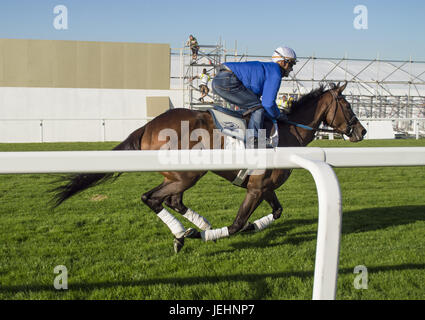 Trainer Kenny McPeek puts Investec Oaks contender racehorse 'Daddys Lil Darling' through her paces on the Epsom Downs racecourse track.  Featuring: Daddys Lil Darling, Olivier Peslier Where: Epsom, United Kingdom When: 26 May 2017