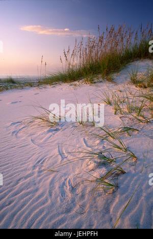 Beach dune, St Josephs Peninsula State Park, Florida - Stock Photo