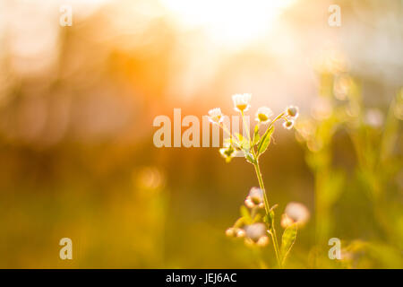 Amazing summer flowers in sun rays and inspirational lights background - Stock Photo