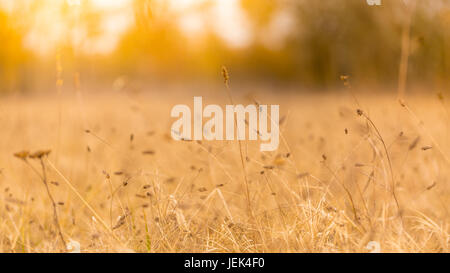 Abstract autumn meadow in sunset light. Calm seasonal nature scene, field of meadows and dry flowers - Stock Photo