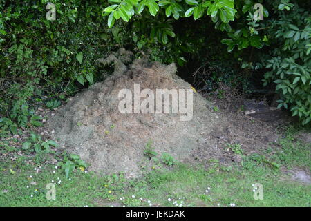 Grass cuttings compost heap in garden with grass at front and shrubs bushes to background Herefordshire England - Stock Photo
