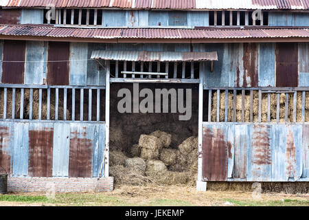 old rustic animal barn made with rusted galvanized metal sheets, full of hay, in desaturated and grunge color style - Stock Photo