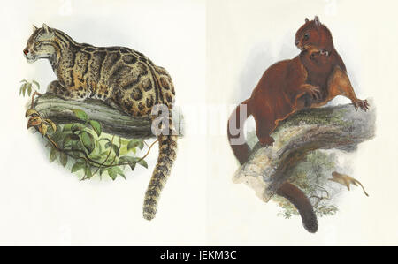 Double old illustration of mammals of the island of Formosa. By Joseph Wolf, publ. on On the Mammals of the Island - Stock Photo