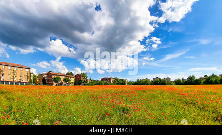 Wide angle view of a poppy field under dramatic sky in spring. - Stock Photo