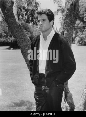 Actor Warren Beatty, Portrait Standing Near Tree, early 1960's - Stock Photo