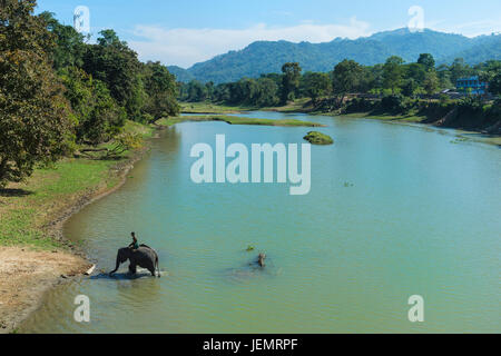 Mahout riding an Indian elephant (Elephas maximus indicus) in the river, Kaziranga National Park, Assam, India - Stock Photo