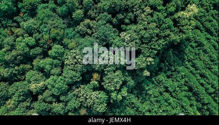 Aerial Drone Flyover View Of Large Green Forest In Summer - Stock Photo