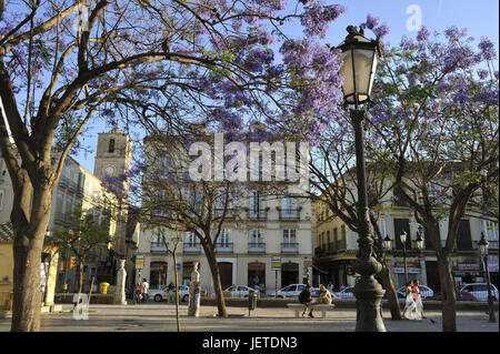 Spain, Malaga, tourist on the plaza de la Merced, - Stock Photo