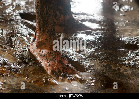 Bare man feet in the mud - Stock Photo
