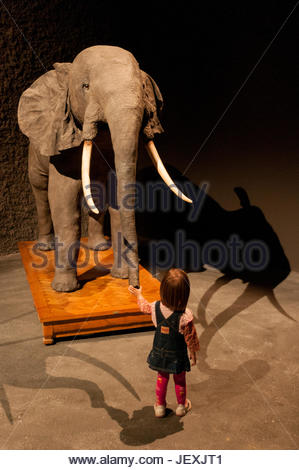 A little girl touches the trunk of a stuffed African elephant in the Museu Blau Natural History Museum in Barcelona. - Stock Photo