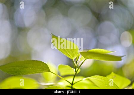 Plant leaves grow in Poco das Antas Biological Reserve. - Stock Photo
