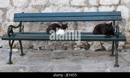 Stray city cats commandeer a public bench in the old town, Dubrovnik, Croatia, Europe - Stock Photo