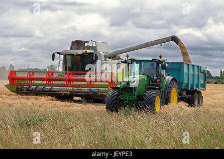 Combine Harvester cutting Wheat in a field in rural england, with Tractor and Trailer being filled with grain - Stock Photo