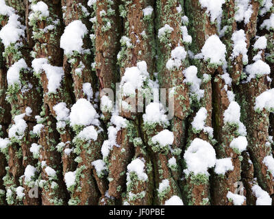 Bark of a Tree in winter - Stock Photo