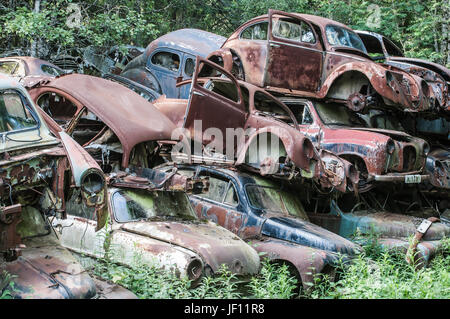 Old cars abandoned in forest - Stock Photo