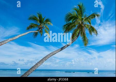 palm fringed kolovai beach,tongatapu, tonga, south pacific - Stock Photo