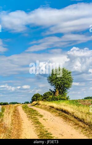 Way in summer - Stock Photo