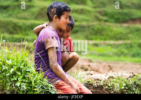 Nepali boys in a rice field, Nuwakot district, Nepal - Stock Photo